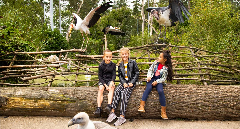 Schoolreisje-naar-dierenpark-amersfoort