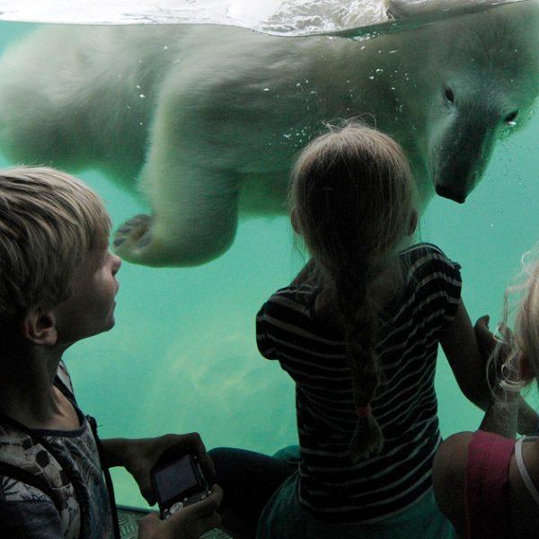 ijsberen-kijken-op-schoolreis